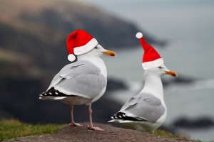 gulls with santa hats